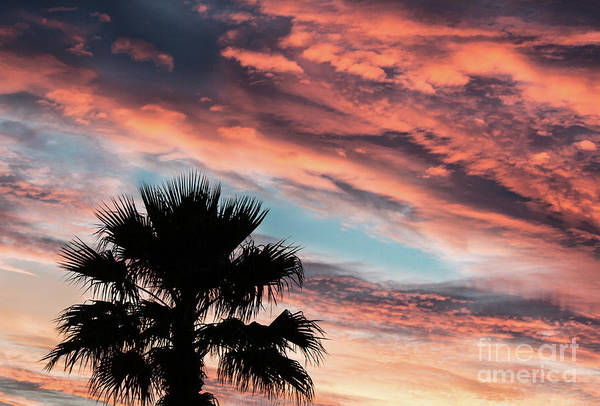 Wall Art - Photograph - Silhouette Palm by Robert Bales