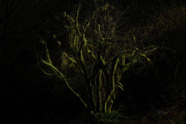 Photograph - Silky Tree by Bill Posner