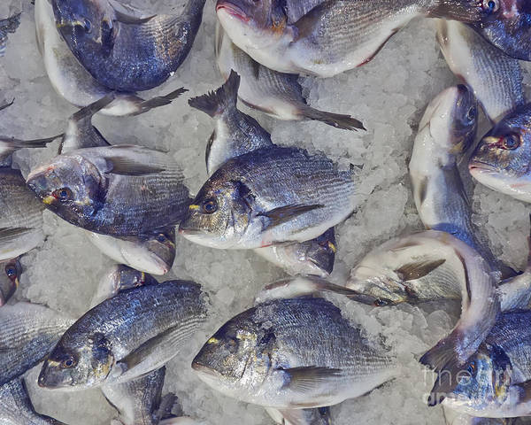 Wall Art - Photograph - Silver Sea Bream For Sale At The by Dimitrios