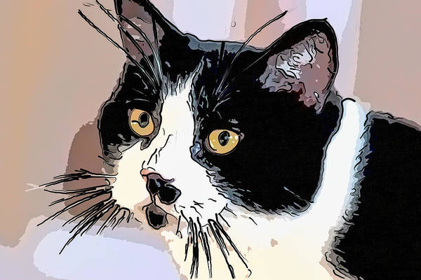 Digital Art - Simple Tuxedo Cat by Don Northup
