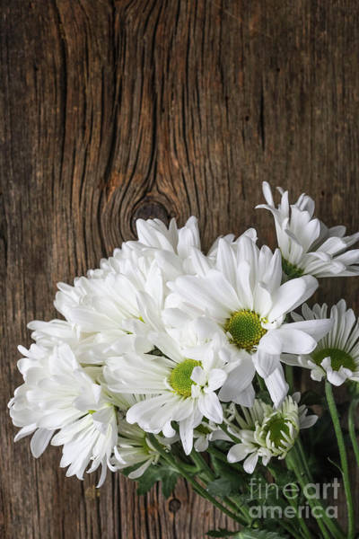 Wall Art - Photograph - Simple White Flowers Over Wood by Edward Fielding