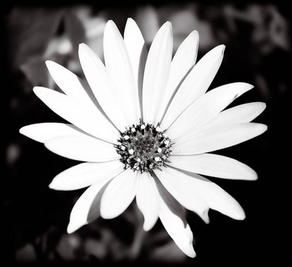 Photograph - Simply Nature by Milena Ilieva