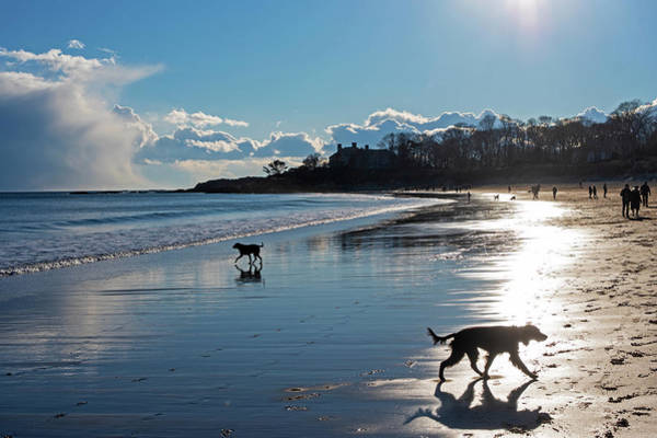Photograph - Singing Beach Dogs At Play Manchester Ma by Toby McGuire