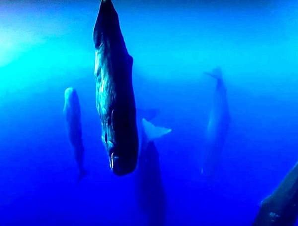 Wall Art - Photograph - Singing Whales by Lord Frederick Lyle Morris - Disabled Veteran