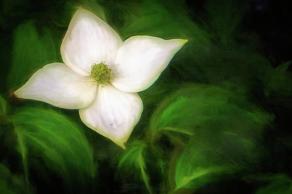 Digital Art - Single Dogwood Natural by Jason Fink