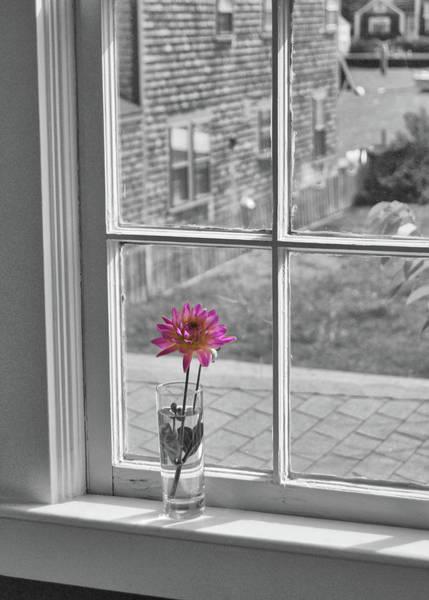 Photograph - Single Flower Vase by JAMART Photography