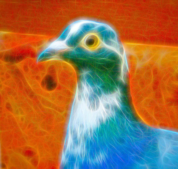 Photograph - Single Homing Pigeon Fibers by Don Northup