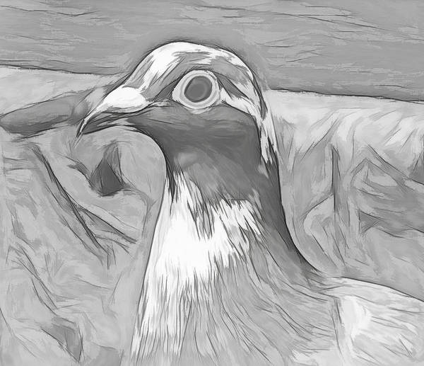 Photograph - Single Homing Pigeon Sketch by Don Northup