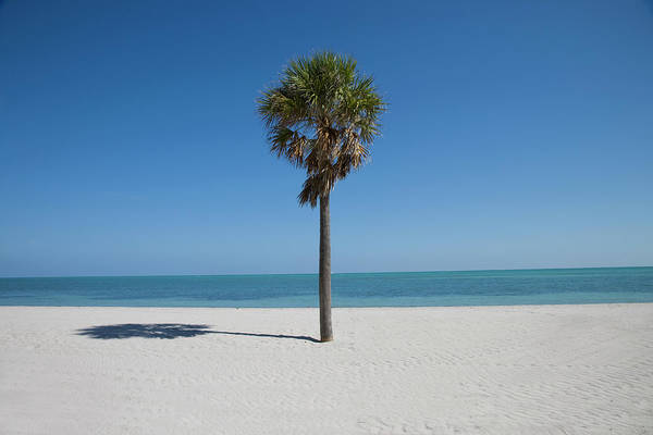 Key Biscayne Photograph - Single Palm Tree On Crandon Beach by Buena Vista Images