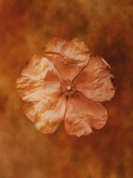 Poppies Digital Art - Single Poppy by Don Bishop
