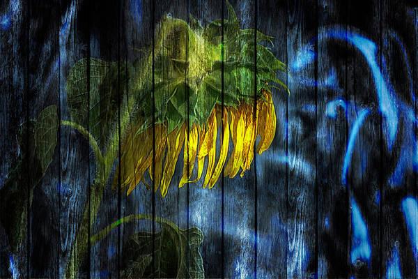 Photograph - Single Sunflower Drei by Wolfgang Stocker