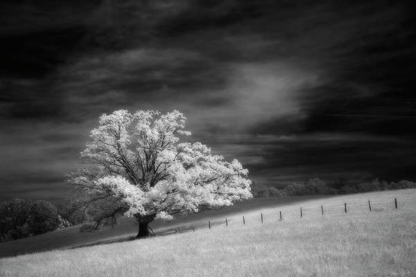 Wall Art - Photograph - Single Tree In Black And White Infrared by Adam Jones