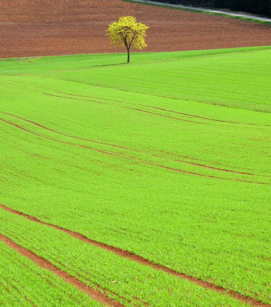 Bavaria Photograph - Single Tree In Green Field by Henglein And Steets