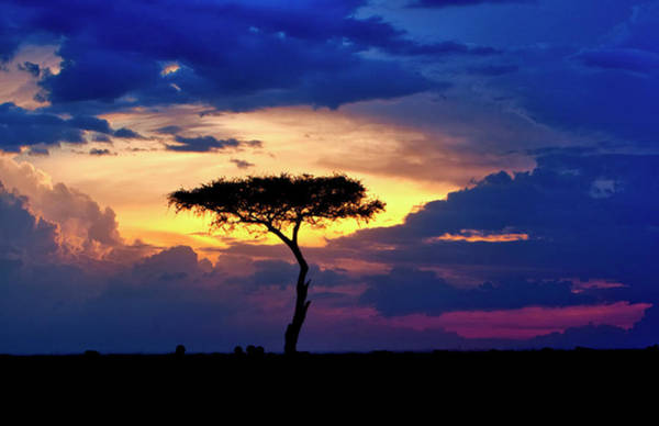 Savannah Photograph - Single Tree On Savannah At Sunset by Danita Delimont