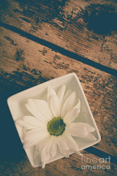 Wall Art - Photograph - Single White Daisy Flower by Edward Fielding