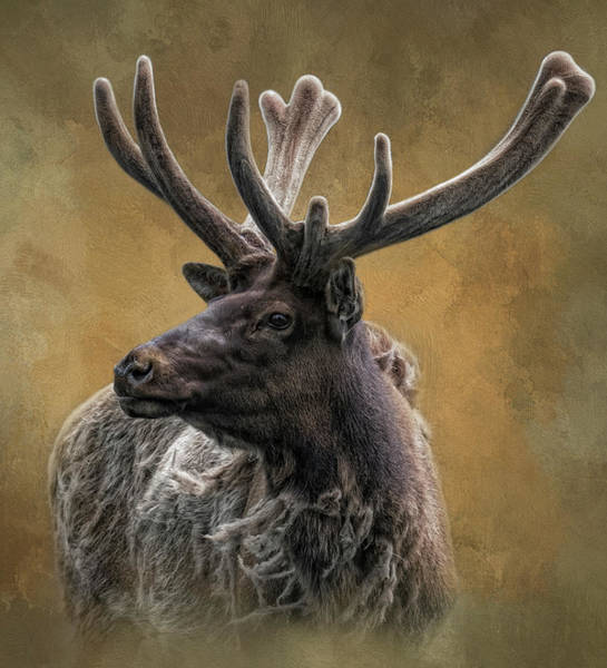 Photograph - Sir Elk by Kelley Parker