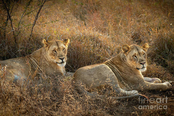 Wall Art - Photograph - Sisters by Jamie Pham