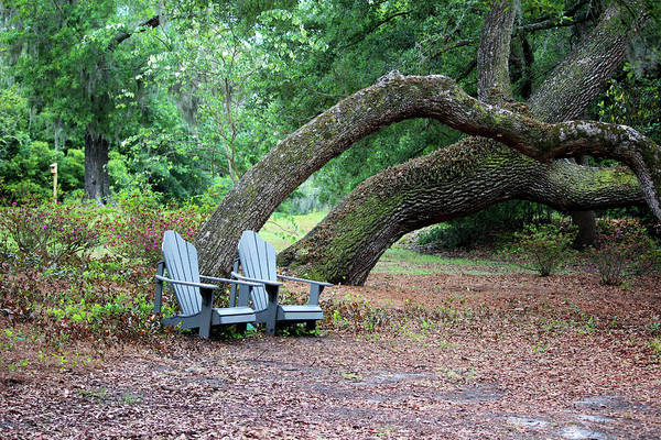 Photograph - Sit For A Spell In Nature by Cynthia Guinn