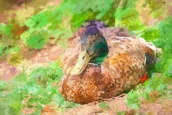 Photograph - Sitting Duck Abstract by Don Northup