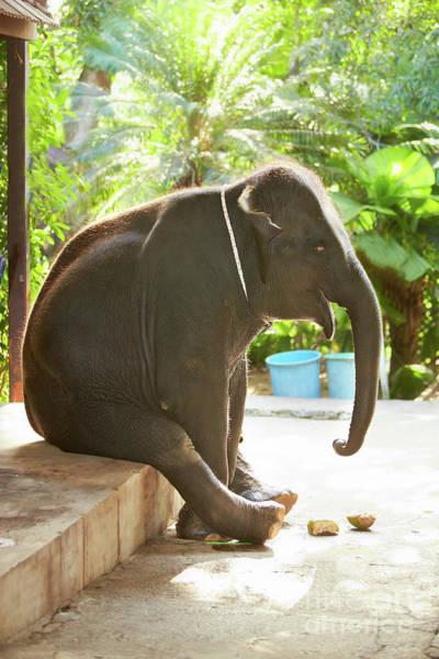 Open Photograph - Sitting Elephant by Pasha Ivaniushko