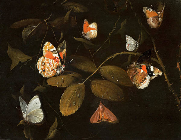 Wall Art - Painting - Six Butterflies And A Moth On A Rose Branch, 1690 by William Gouw Ferguson