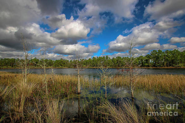 Photograph - Six Little Cypress by Tom Claud