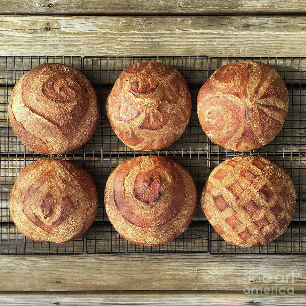 Photograph - Six Wheat And Rye Sourdough Boules 2 by Amy E Fraser