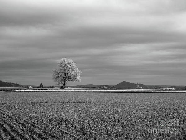 Wall Art - Photograph - Skagit Farmland Tree by Mike Reid