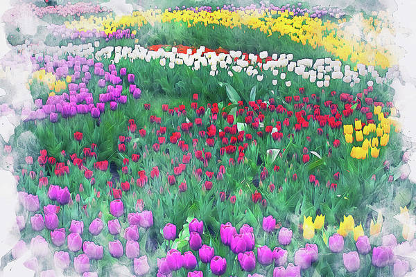 Painting - Skagit Valley - 04 by Andrea Mazzocchetti