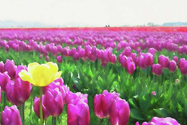 Painting - Skagit Valley - 15 by Andrea Mazzocchetti