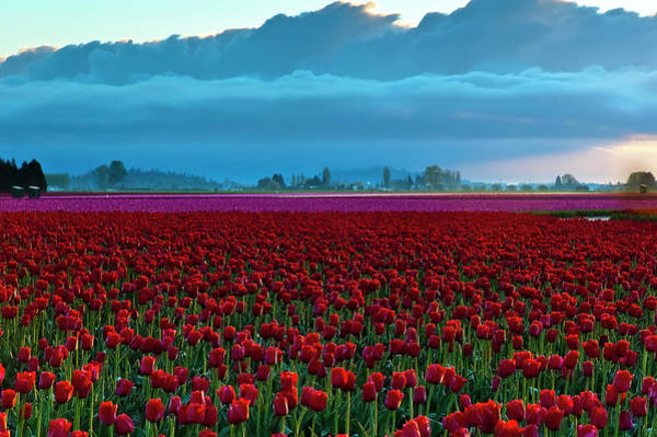 Vernon County Photograph - Skagit Valley Morning by Rebecca L. Latson