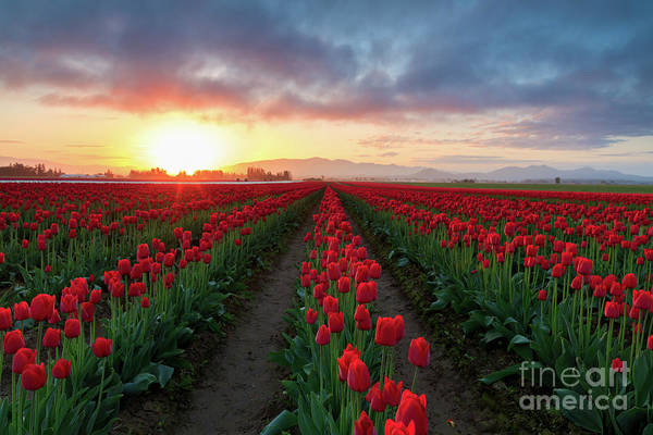 Photograph - Skagit Valley Sunrise by Beve Brown-Clark Photography