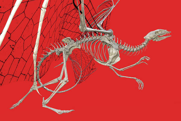 Wall Art - Digital Art - Skeleton Dragon With Red by Betsy Knapp