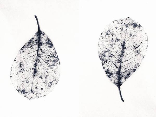 Photograph - Skeleton Leaves Up And Down by Itsonlythemoon