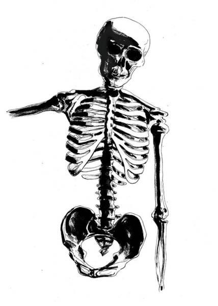 Drawing - Skeleton Study by Irina Sztukowski