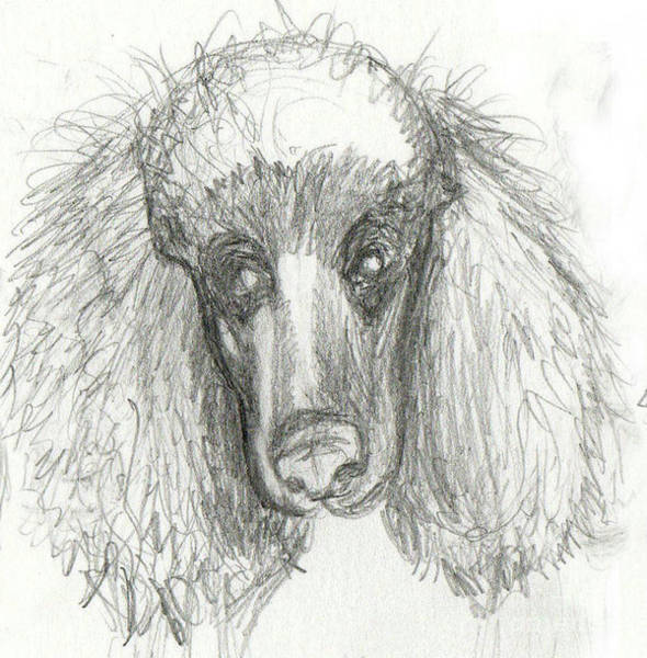 Wall Art - Drawing - Sketch Of Zoe by Genevieve Esson