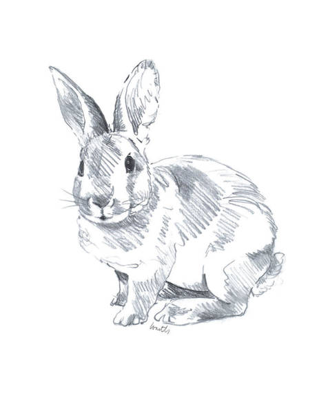 Wall Art - Drawing - Sketched Rabbit II by Lanie Loreth