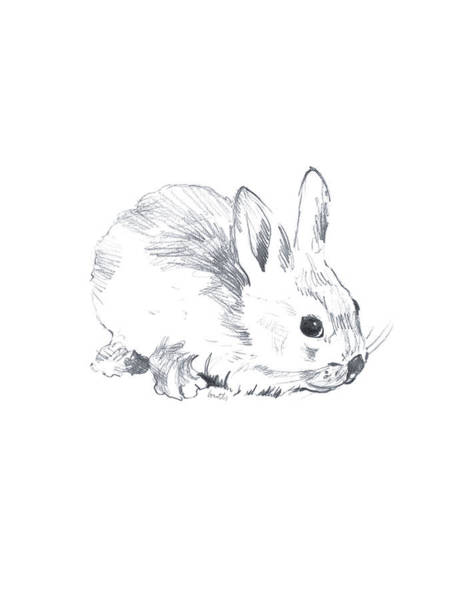 Wall Art - Drawing - Sketched Rabbit IIi by Lanie Loreth