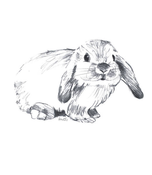Wall Art - Drawing - Sketched Rabbit Iv by Lanie Loreth