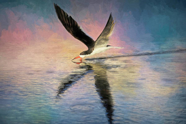 Wall Art - Photograph - Skimmer In The Spotlight by Donna Kennedy