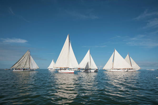 Photograph - Skipjack Fleet by Mark Duehmig
