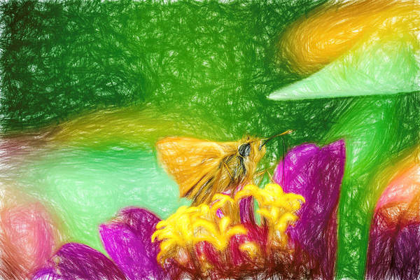 Photograph - Skipper Butterfly Colorful Pencil by Don Northup