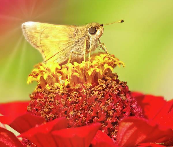 Photograph - Skipper Butterfly On Zinnia Flower by A Gurmankin