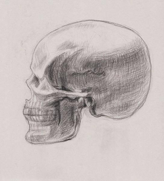 Skull Study Profile Art Print