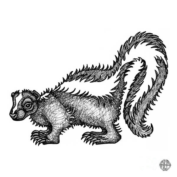 Drawing - Skunk by Amy E Fraser