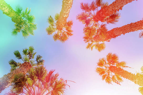 Wall Art - Photograph - Sky And Palm Trees by Delphimages Photo Creations