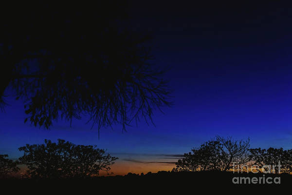 Photograph - Sky Background At Dusk With Silhouettes Of Trees And Horizon. by Joaquin Corbalan