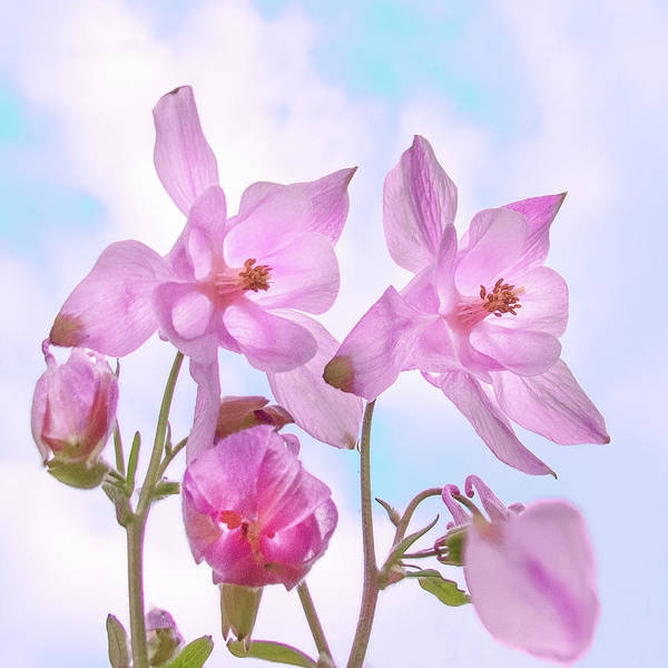 Wall Art - Photograph - Sky Blue Pink by Peter Chadwick Lrps