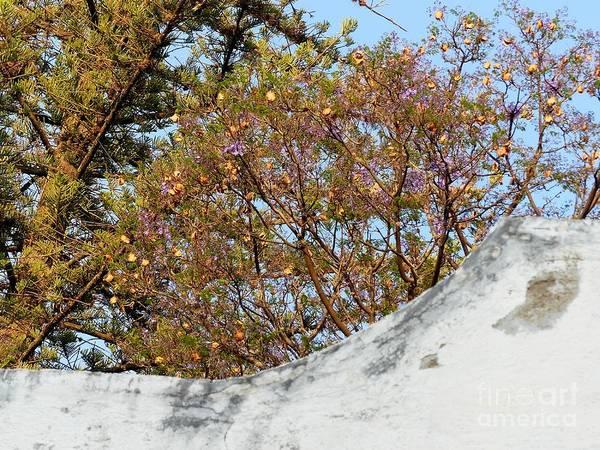 Photograph - Sky Bouquet by Rosanne Licciardi