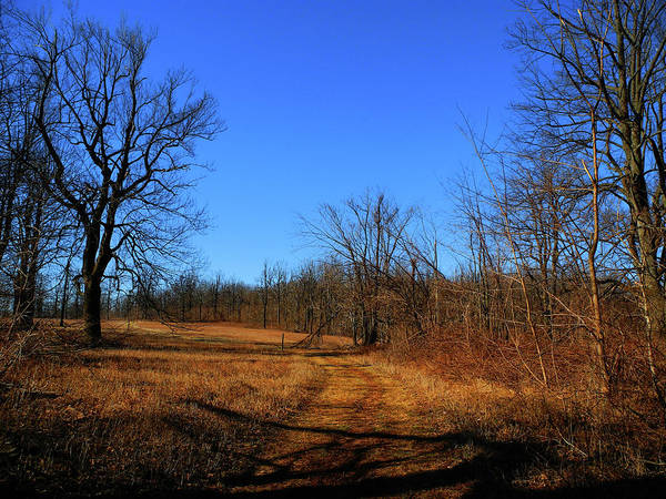 Photograph - Sky Meadows State Park Va Section 4 Blue Bird Day by Raymond Salani III